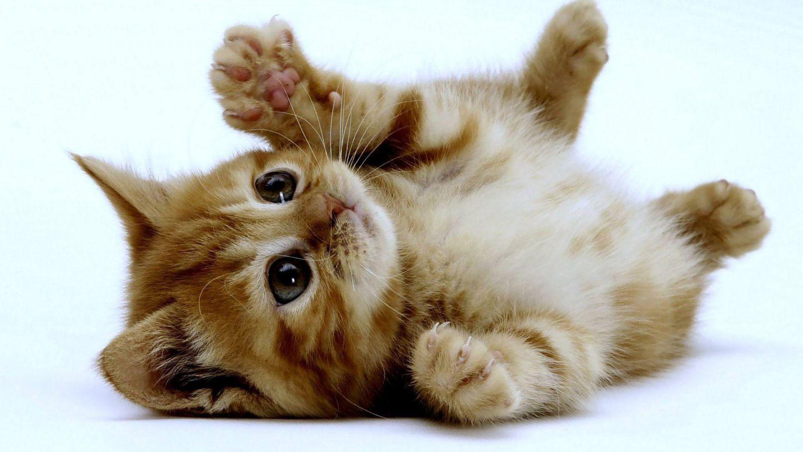 fisioterapia animales pequeños